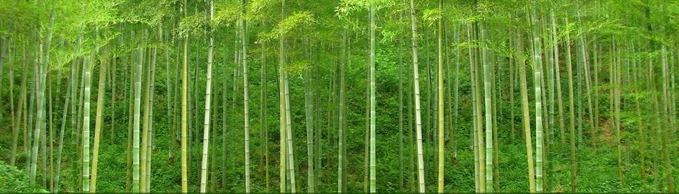 lenjerii de pat din fibra de bambus