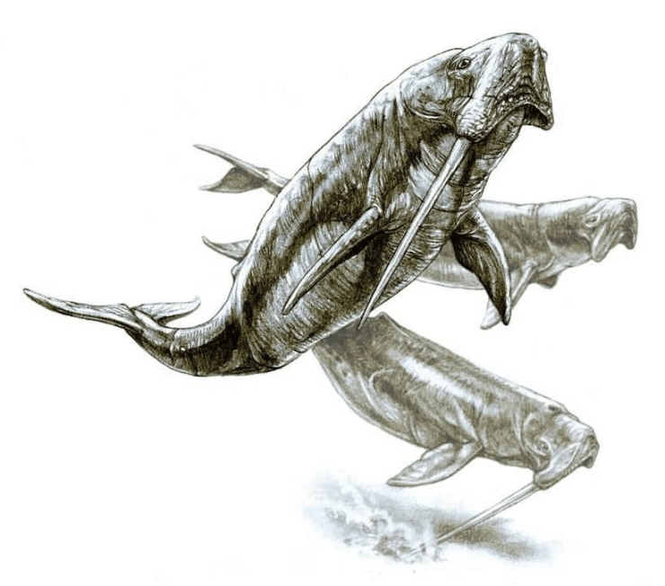 Figure 5 — Artist's reconstruction of the majestic Odobenocetops sp. Illustration by Pavel.Riha.CB. Reproduced under CC BY-SA 3.0.