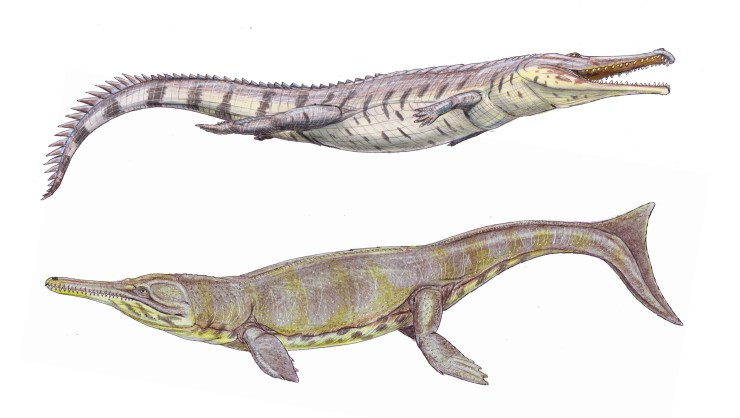 Figure 2 — Life reconstructions of two thalattosuchians. Top: the teleosauroid Machimosaurus hugii (by Dmitry Bogdanov). Bottom: the metriorhynchid Metriorhynchus superciliosus (by Dmitry Bogdanov).