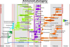 Figure 7 — Origin and diversity of ammonoids and the effects of mass extinctions (modified after Ernst and Klug 2011).