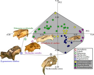 Figure 9 — Principal Components Analysis of extant and extinct metatherian skulls.