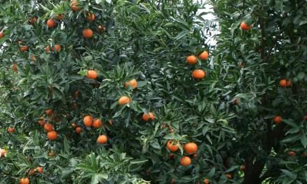 Corso per patentino fitosanitario a Palagianello e Castellaneta