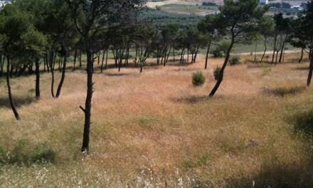 La pineta Spallone si fa bella, con sentieristica e cartellonistica