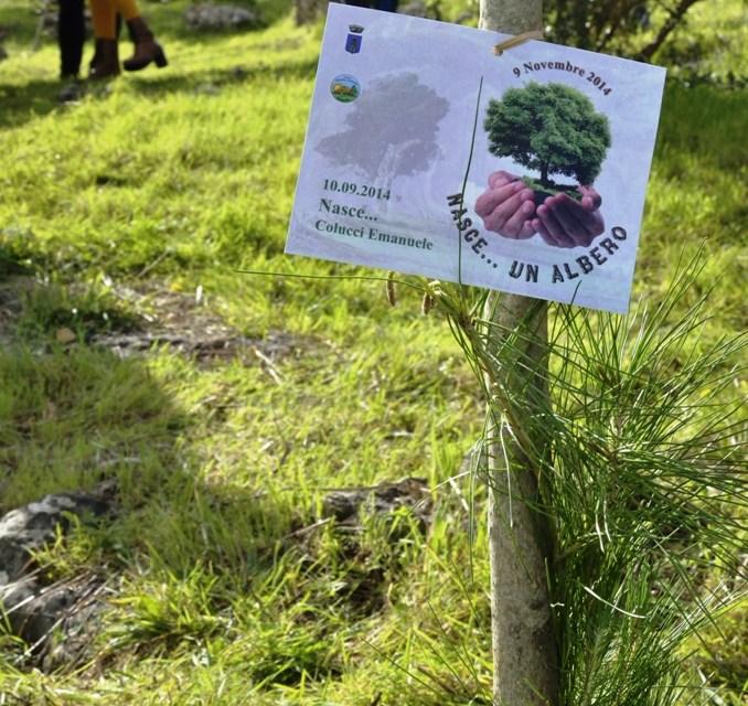 """MOTTOLA (TA). """"Nasce un albero"""". Un albero in pineta, per ogni nato dal novembre 2014 sino ad oggi"""