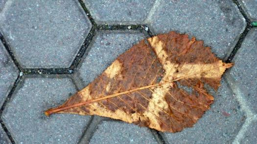 Photo of a leaf on a walkway with hexagonal-shaped stones.
