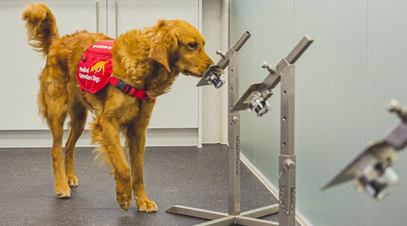 Durham's Covid sniffer dogs begin real-world use