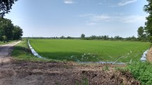 As plantações da planície de Parma