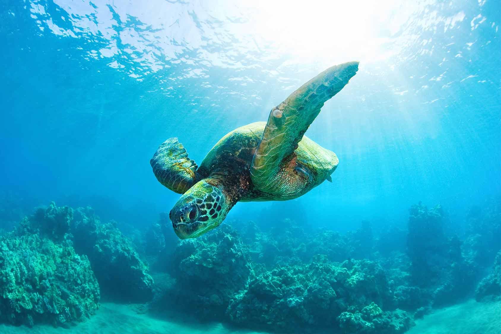El Nido Marine Life Philippines