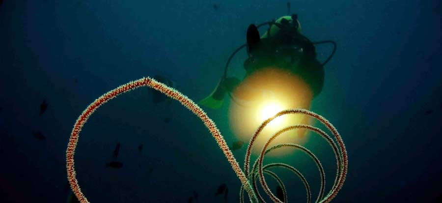 PADI Advanced Open Water Course - Night Dive