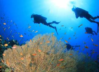 Fun Diving El Nido Philippines