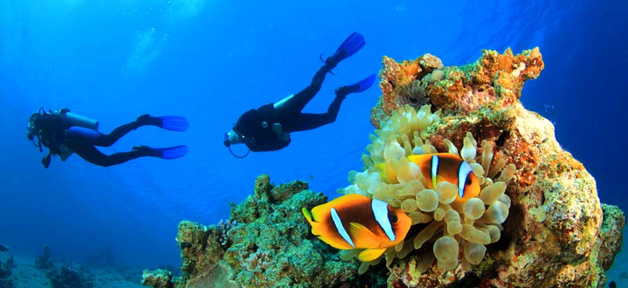 PADI Open Water Course - Clown Fish