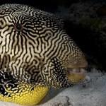 Amazing fish in el Nido Philippines