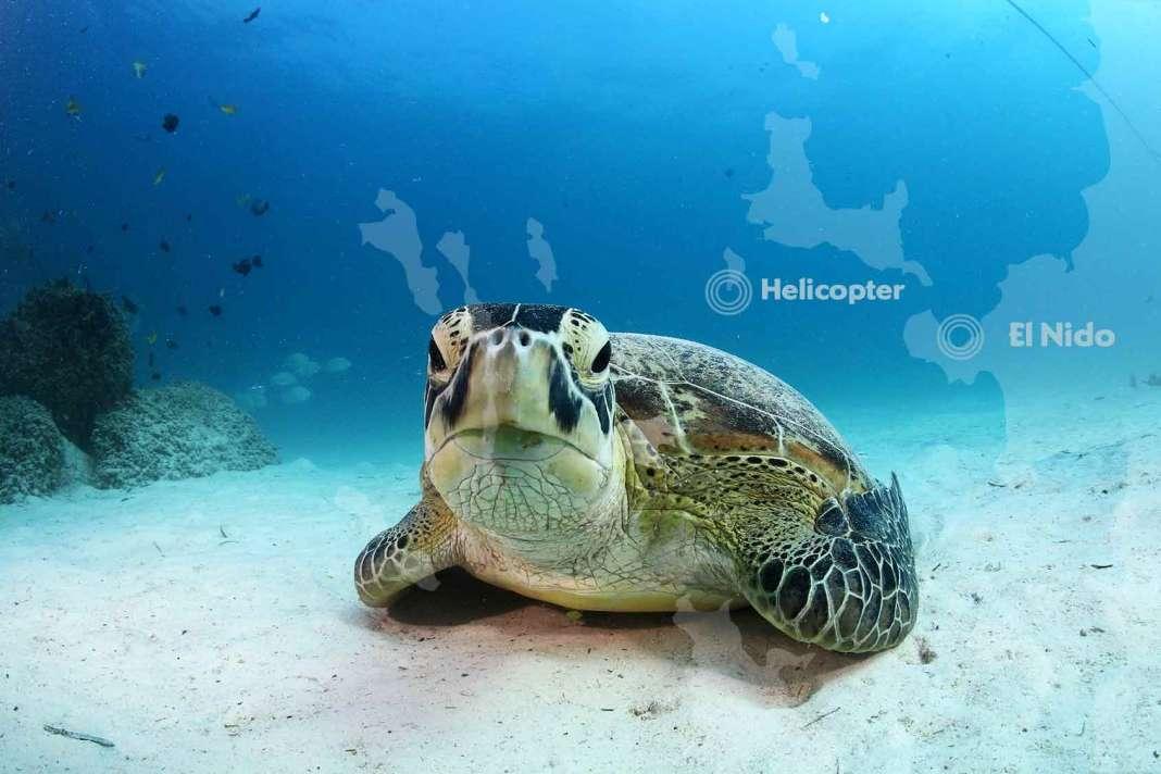 el-nido-scuba-diving-philippines