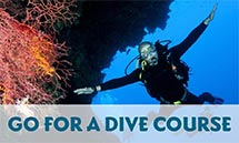 dive-course-in-elnido