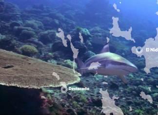 marine life in el nido - blacktip reef shark