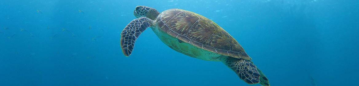 PADI Discover Scuba Diving - Sea Turtle