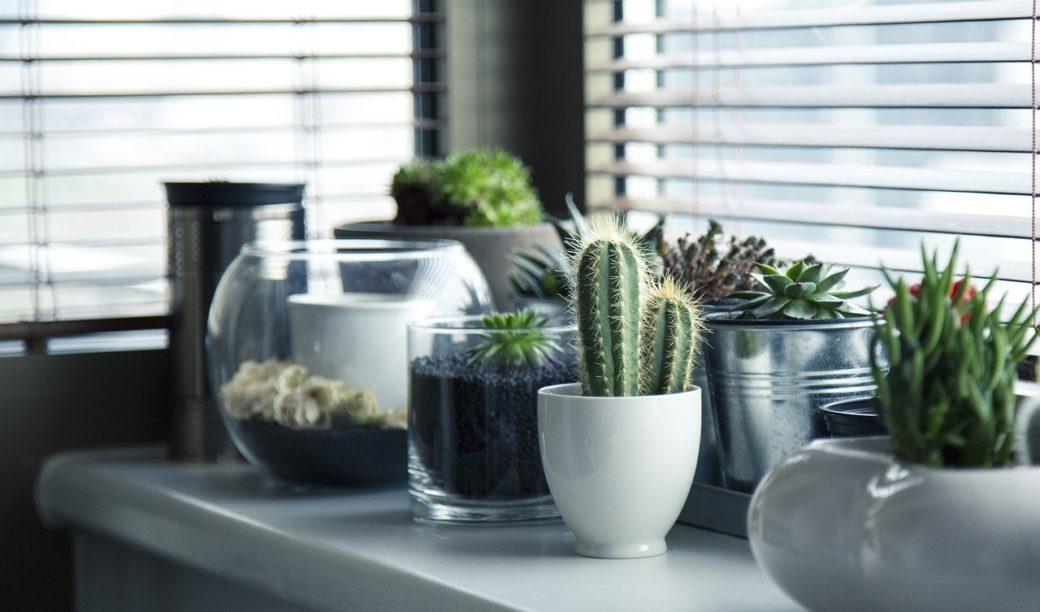 come arredare il bagno con le piante