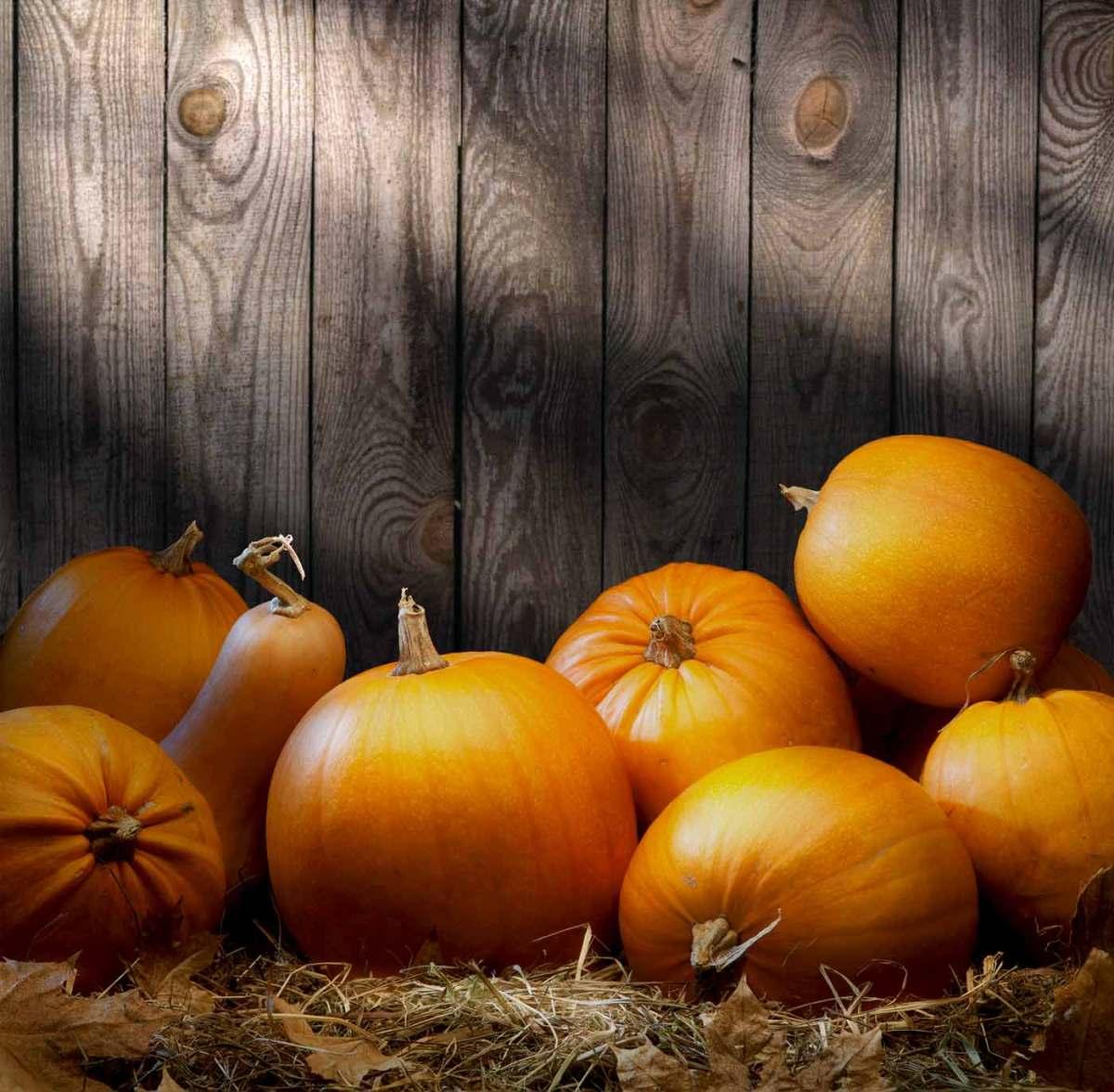 easy paleo recipes for fall
