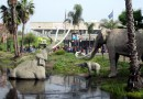 Job | Research Fellow @ La Brea Tar Pits and Museum