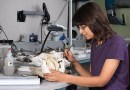 Webcast | Inside the Smithsonian's Fossil Prep Lab