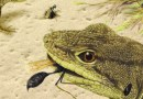 On the News   MSU paleontologist leads expedition that unearths new species of ancient iguana-like lizard @ MSU