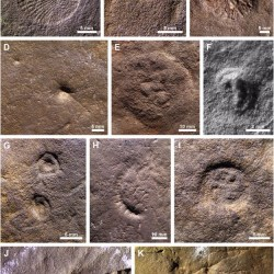 Just out | Possible evidence of primary succession in a juvenile-dominated Ediacara fossil surface from the Flinders Ranges, South Australia Palaeogeography, Palaeoclimatology, Palaeoecology