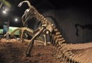 On the News | Royal Institute of Natural Sciences: Crowdfunding campaign for Ben the plateosaurus resounding success @ The Brussels Times