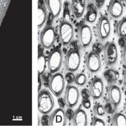 Just out | Paleobiogeographic Remarks of the Devonian Corals and Bryozoans of Brazil @ Anuário do Instituto de Geociências - UFRJ
