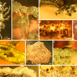 Just out | Diversity and ecological adaptations in Palaeogene lichens @ Nature Plants