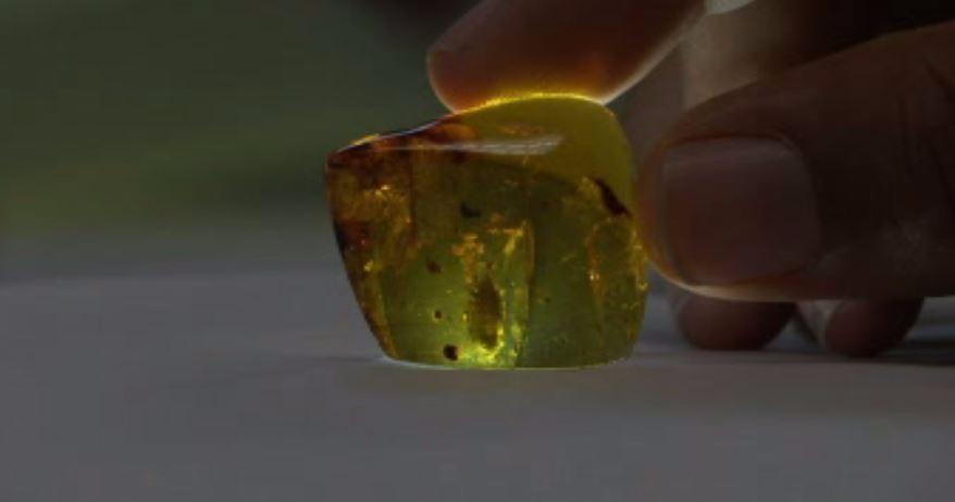 On the News   Mexico   Descubren cochinillas de hace 23 millones de años en ámbar de Chiapas @ Televisa.news