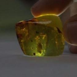 On the News | Mexico | Descubren cochinillas de hace 23 millones de años en ámbar de Chiapas @ Televisa.news