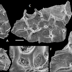 Just out | Early Ordovician black corals from China @ Bulletin of Geosciences