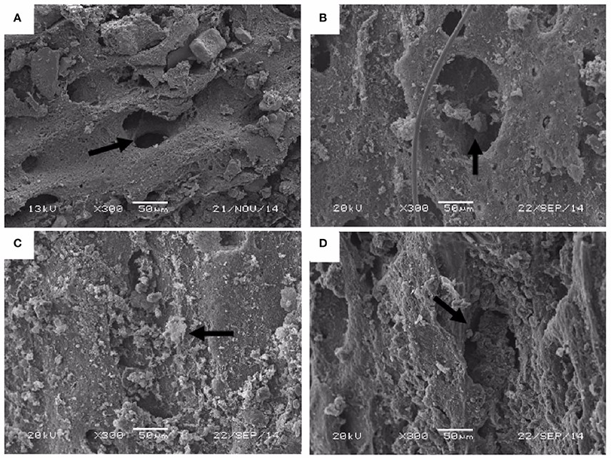 Just out   Role of Sediment Size and Biostratinomy on the Development of Biofilms in Recent Avian Vertebrate Remains @ Frontiers in Earth Science