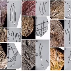 Just out   Mesosaurid Swim Traces @ Frontiers in Ecology and Evolution