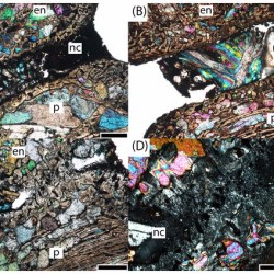 Just out   Microanatomy and paleohistology of the intercentra of North American metoposaurids from the Upper Triassic of Petrified Forest National Park (Arizona, USA) with implications for the taxonomy and ontogeny of the group @PeerJ