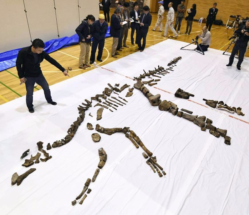 On the News   Japan   Japan's largest fossilized dinosaur skeleton unearthed in Hokkaido @ The Japan Times
