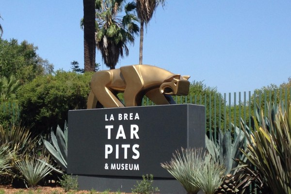 Assistant Collections Manager | La Brea Tar Pits and Museum