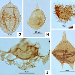 Just out | Dinoflagellate cyst assemblages, biostratigraphy and paleoenvironment of a Paleocene-Early Eocene sedimentary succession in the northern Niger Delta Basin: Comparison with low, mid and high latitude regions @ Palaeogeography, Palaeoclimatology, Palaeoecology