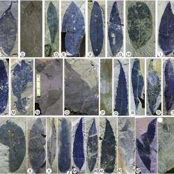 Just out | Eocene–early Oligocene climate and vegetation change in southern China: Evidence from the Maoming Basin @ Palaeogeography, Palaeoclimatology, Palaeoecology
