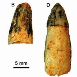 Just out | Early Pliocene continental vertebrate Fauna at Puerto de la Cadena (SE Spain) and its bearing on the marine-continental correlation of the Late Neogene of Eastern Betics @ Palaeogeography, Palaeoclimatology, Palaeoecology