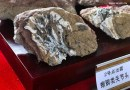 On the News | China | Systematic excavation of dinosaur fossils launched in NE China @ Xinhua Net