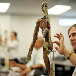 Job | Research Assistant of Anatomy @ Midwestern University