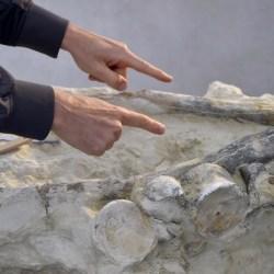 On the News | France | Angers: Le fossile d'un reptile marin rarissime découvert dans le Maine-et-Loire @ 20 minutes
