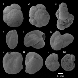 Just out | How to Discriminate Athalassic and Marginal Marine Microfaunas: Foraminifera and Other Fossils from an Early Holocene Continental Lake in Northern Saudi Arabia @ Journal of Foraminiferal Research