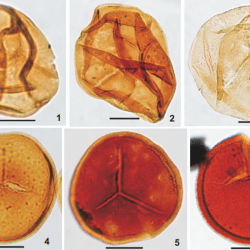 Just out | Composition and Occurence of the Grandispora Maculosa Zonal Assemblage (Mississipian) in the Subsurface of the Carnarvon Basin and the Coolcalalaya Sub-Basin of Western Australia, and its Gondwanan Distribution @ Rivista Italiana di Paleontologia e Stratigrafia