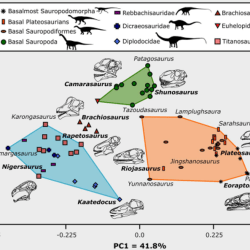 Just out | Craniodental functional evolution in sauropodomorph dinosaurs @ Paleobiology