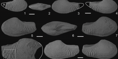 Just out | Costinuculana magharensis n. gen. n. sp. (Bivalvia, Nuculanidae) from the Middle Jurassic of Gebel Maghara, North Sinai, Egypt @ Journal of Paleontology