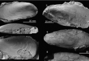 Just out | Chemosymbiotic bivalves from Miocene methane-seep carbonates in Italy @ Journal of Paleontology