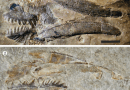 Just out | Exceptionally preserved conodont apparatuses with giant elements from the Middle Ordovician Winneshiek Konservat-Lagerstätte, Iowa, USA @ Journal of Paleontology