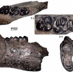 Just out | The first Eocene rodents from the Pacific Northwest, USA @ Palaeontologia Electronica